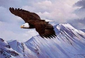 Soaring_Eagle_2